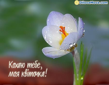 Кохаю тебе, моя квіточка