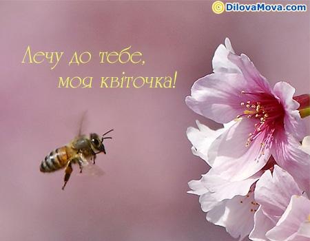 Лечу до тебе моя квіточка