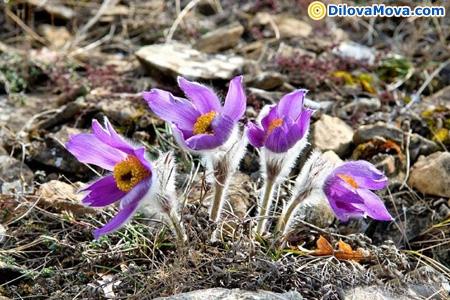 Квіти на День автономної республіки Крим