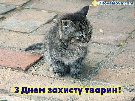 Вітаю з Всесвітнім днем захисту тварин