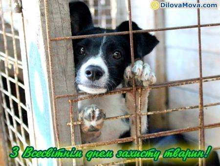 Привітання у день захисника тварин