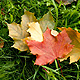 Листівка - Святкової погоди