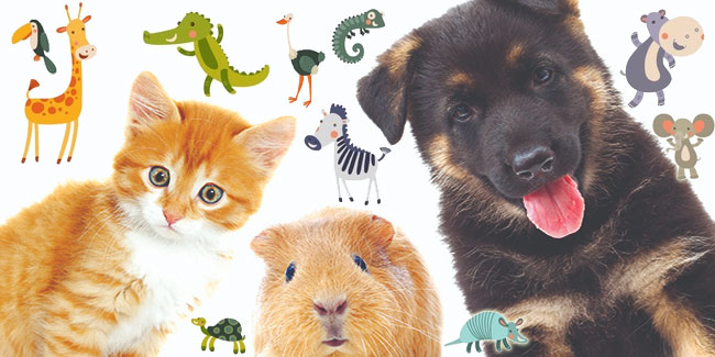 10 грудня - День прав тварин