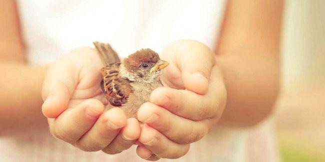 Подія 13 листопада - Всесвітній день доброти