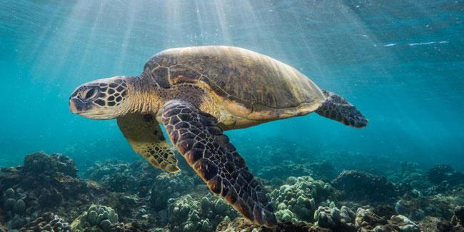 Подія 16 червня - Всесвітній день морських черепах