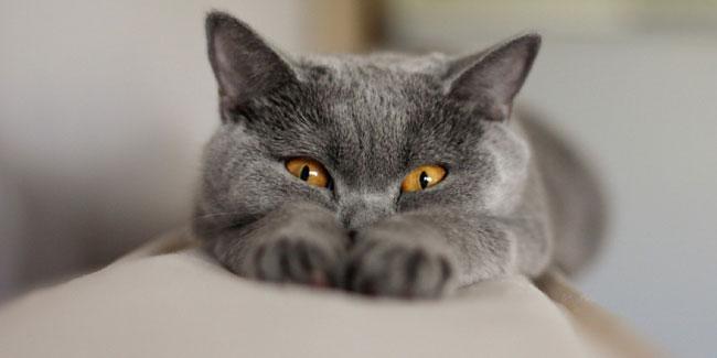 """Результат пошуку зображень за запитом """"день кішок"""""""