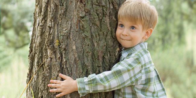 Ліси на нашій Землі займають цілу третину всієї суші нашої планети