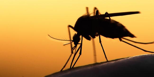 День боротьби проти малярії