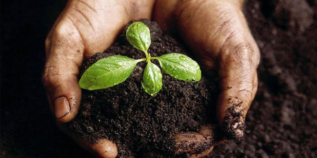 Наука досягла величезного приросту врожайності