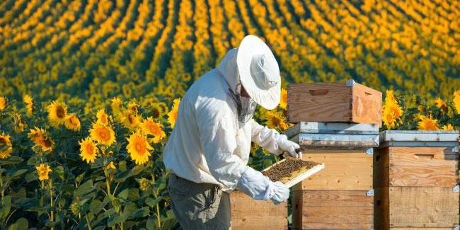 Професійне свято бджолярів