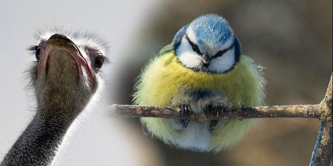 Міжнародний день птахів та День орнітолога