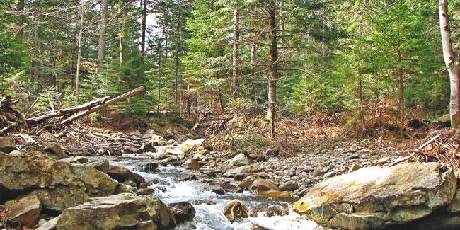 Ліс - живий скарб нашої землі. Бережіть його!
