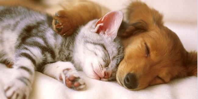 Міжнародний день сну