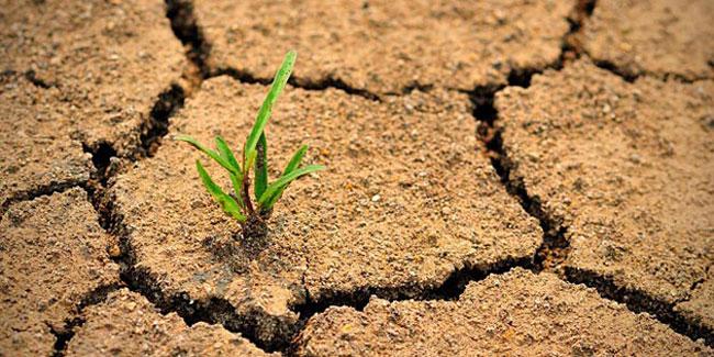 Опустелювання - це один з найбільш тривожних світових процесів деградації навколишнього середовища