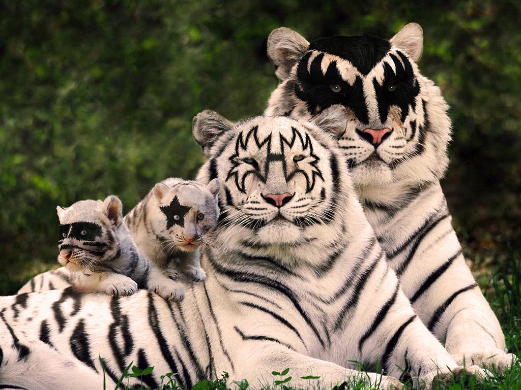 Картинки с тигром и надписями, рядом открытки картинки